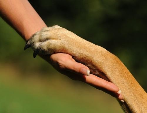 HSC Simmering: Familienhunde